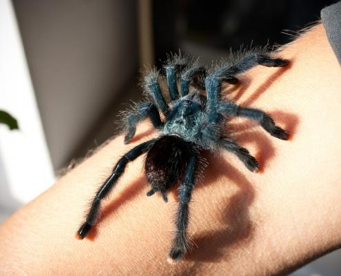 spider 629902 1920 495x400 - Ängste & Phobien